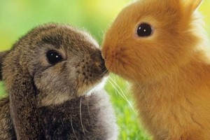 Схема профилактических и лечебных мер,  для поддержания здоровья кроликов.