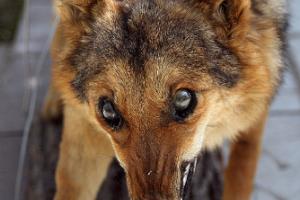 Профилактика бешенства диких животных
